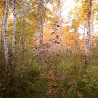 Осенний лес :: Елена *