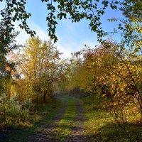 Дорожка в лесу. :: Наталья