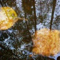 Осенний вальс.Осень в отражении :: Павлова Татьяна Павлова