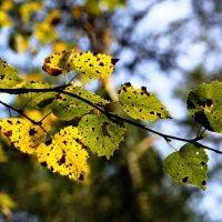 Осенние листья :: Viktor Heronin
