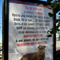 Ты не бросай в собаку камень :: Наталья Джикидзе (Берёзина)