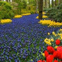 цветочная река :: Эльвира Лопатина