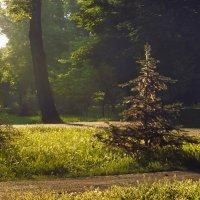 утро в парке :: Татьяна Найдёнова