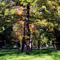 В парке осенью  /3/ :: Сергей