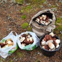 дневная норма грибника (25-30 кг боровиков) :: сергей