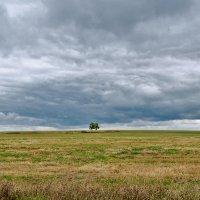 Вот и осень... :: Ирина Шарапова