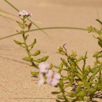 жизнь в дюнах 2 :: Андрей
