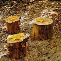 Осень на троих. :: владимир