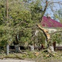 Последствия урагана :: Игорь Сикорский