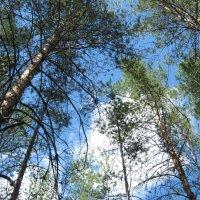 Сентябрьский лес :: Татьяна Литвинова