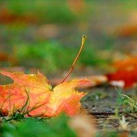 Вот и осень... :: Anna P