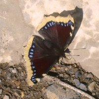 Что же привлекло бабочку? :: татьяна
