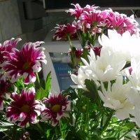 Осенние цветы :: татьяна