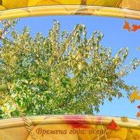 Наша осень. :: Анатолий Чикчирный