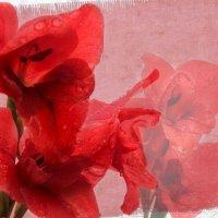 """""""Цветы и грёзы"""" :: Инна Малявина"""