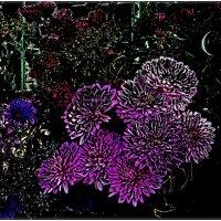 Хризантемы и сентябринки. :: Нина Корешкова