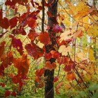 Осенний лес! :: Ирина Антоновна