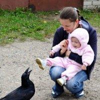 Ворон в поисках общения и еды... :: Марина Романова