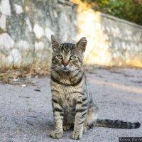 Кот осознавший всё... :: Миша Кравец