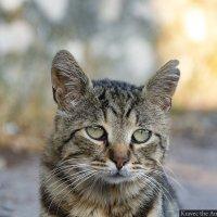 Брошенный кот :: Миша Кравец