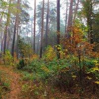 Дождевой печали полон лес... :: Лесо-Вед (Баранов)