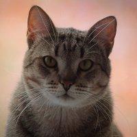 Котенька Сонька :: Дмитрий