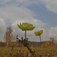 на фоне Осени :: Анна