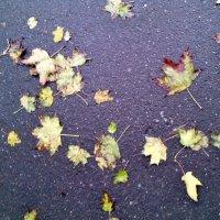 Осень рисует на мокром алфальте. :: Ольга Кривых