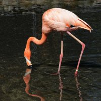 Алматинский зоопарк. Розовый фламинго (2/3) :: Асылбек Айманов