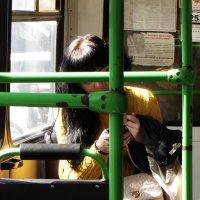 свет в автобусе :: Николай Семёнов