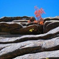 И на скалах растут деревья :: Милешкин Владимир Алексеевич