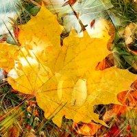 Последний желтый лист... :: анна нестерова