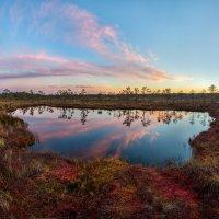 Осенние сумерки на болоте :: Фёдор. Лашков