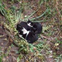 Сердце из котиков :: Андрей Мышко