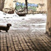 Старый двор :: Александр Горбунов