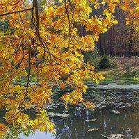 Осеннняя зарисовка :: Дмитрий Сиялов
