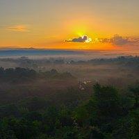 Кубанский лес :: Бронислав Богачевский