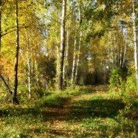 Золотая осень... :: Ольга Кондратова