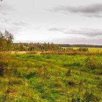 Осень :: Кот Шредингера