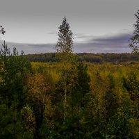 Осень :: Вячеслав Печенин