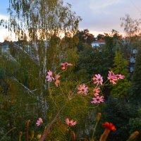 Осенние цветы. :: Надежда Акушко