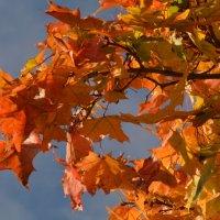 Рыжая  осень на ветке сидела, песню осеннюю радостно пела.... :: Валентина Папилова
