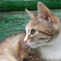 Соседский кот опять идет............. :: Святец Вячеслав