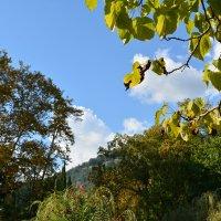 Осень приходит и на Черное море. Абхазия, Новый Афон. :: Михаил Поскотинов