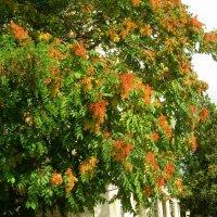 Осень в Кисловодске :: татьяна