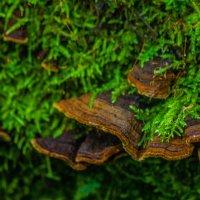 лесные кружева :: олеся тронько