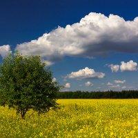 Знойным летом :: Владимир Миронов