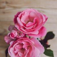 Розовые розы :: Ivanova .