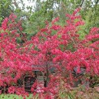 Сентябрь в Японском саду :: Маера Урусова
