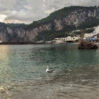 Если чайка села в воду - жди хорошую погоду :: Shapiro Svetlana